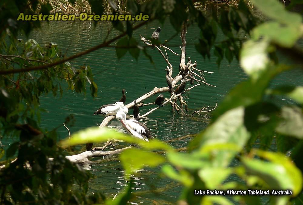 Bilder Und Reiseinformationen Vom Atherton Tableland Mit