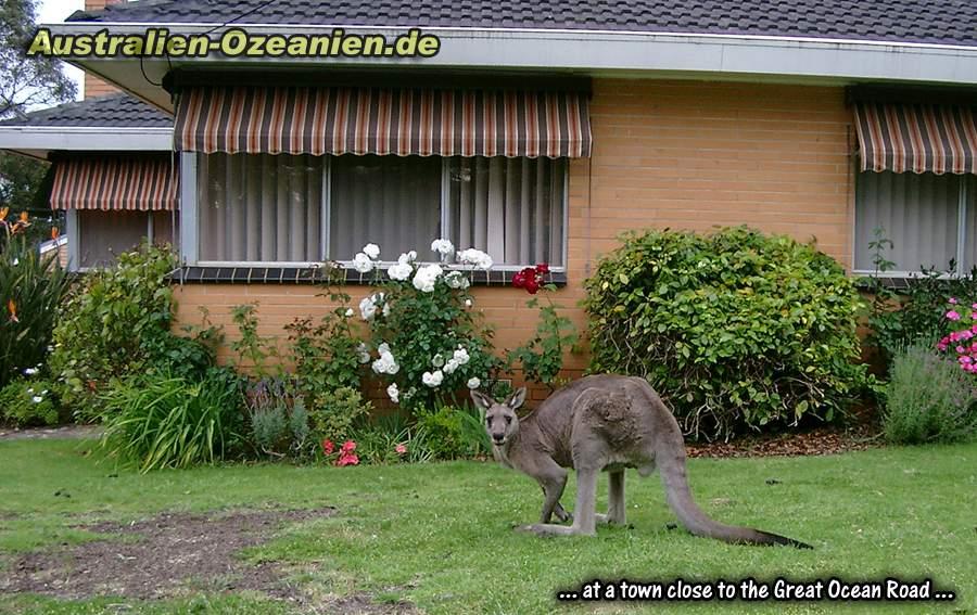 kangaroo island spielen